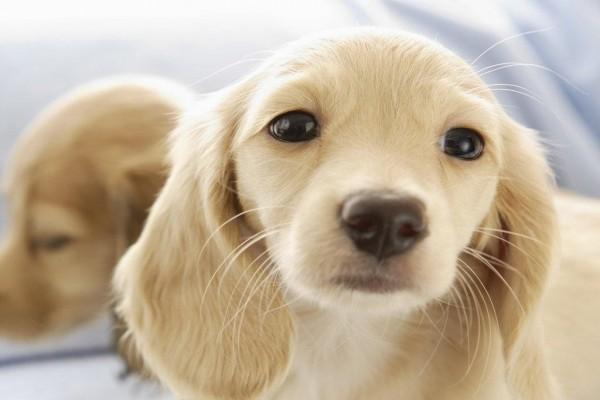 Una ternura de cachorros