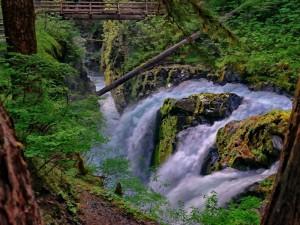 Cascada en el Parque Nacional Olympic (Washington)