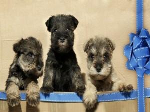 Postal: Tres cachorritos