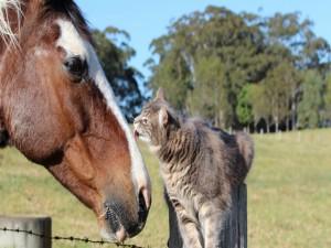 Un caballo y un gatito amigos