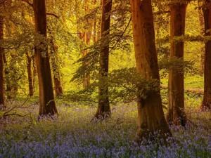 Postal: Árboles y flores en el bosque