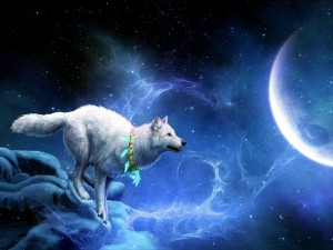 Postal: Lobo mágico