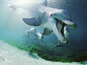 Delfín con la boca abierta