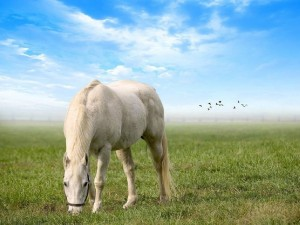 Caballo blanco en la pradera