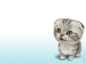 Postal: Lindo gatito