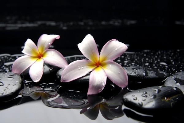 Piedras y flores