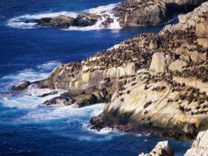 Postal: Grupo de leones marinos