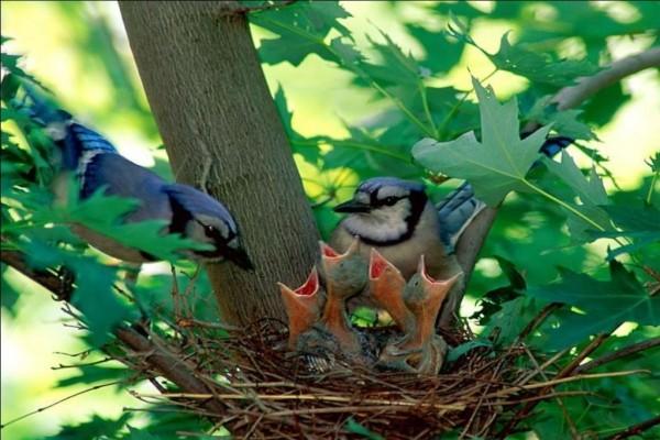 Familia de pajaritos
