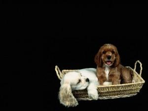 Postal: Dos cachorros