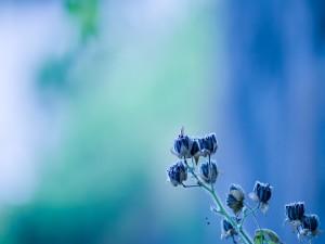 Postal: Ramita con flores azules