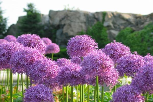 Flores de tallo largo y con forma de bola