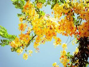 Postal: Flores amarillas en un árbol