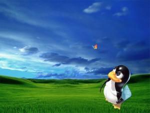 Tux a la caza de MSN