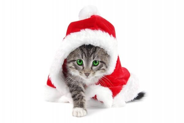 Gatito en Navidad