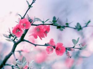 Rama con bonitas flores rosas