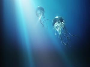 Grandes medusas nadando hacia la superficie