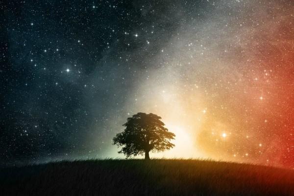Árbol solitario bajo el firmamento