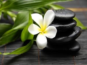 Flor blanca junto a unas piedras negras