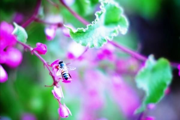 Abeja alimentándose de una pequeña flor