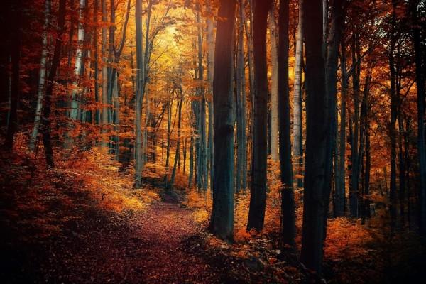 Naturaleza en otoño