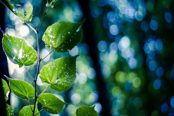 Rama con hojas verdes agujereadas