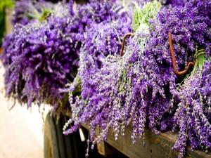 Flores color lavanda
