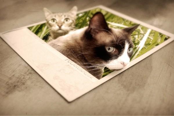 Dos gatos saliendo de una foto