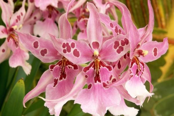 Orquídea de bonitos pétalos