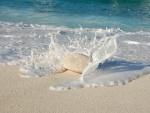 Espuma de mar chocando contra una piedra blanca