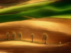 Postal: Campo con árboles