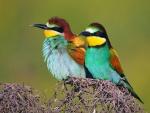 Dos pájaros sobre una ramitas