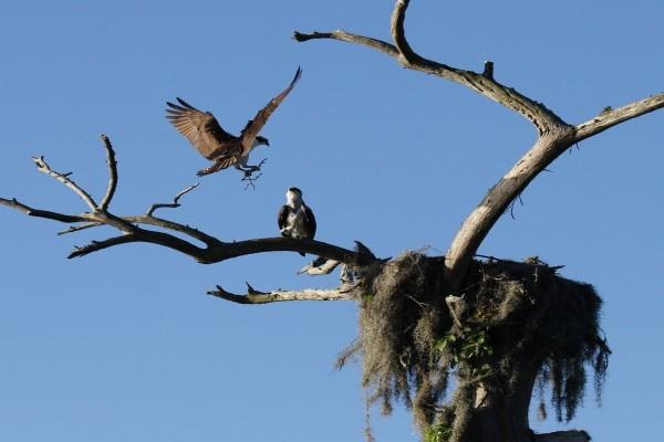 Preparando el nido