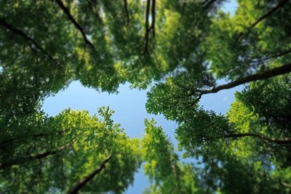 Mirada al cielo entre árboles