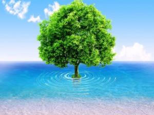 Postal: Árbol en el mar