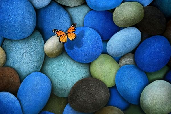 Mariposa volando sobre piedras de colores