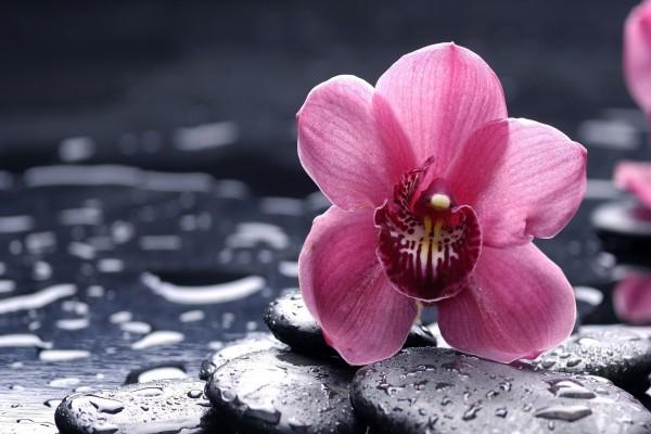 Orquídea encima de unas piedras