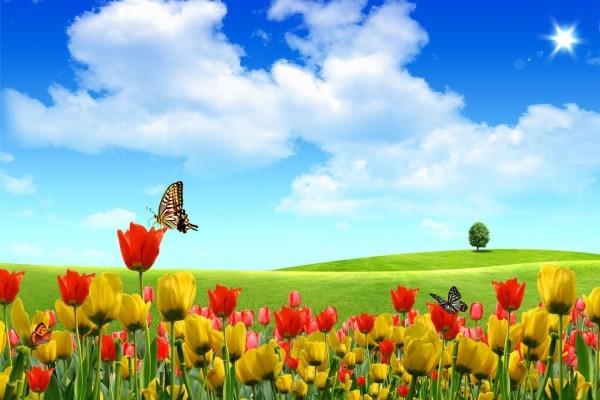 Mariposas sobre tulipanes