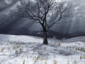 Árbol sin hojas en un paisaje nevado