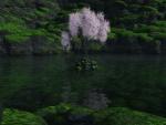 Árbol en medio del agua