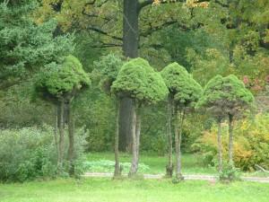Pequeños árboles