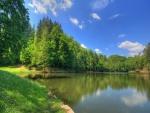 Pinos a la orilla del lago