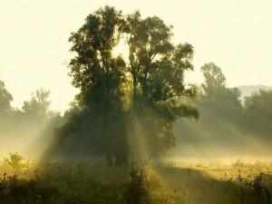 Luz solar a través de las ramas de un árbol