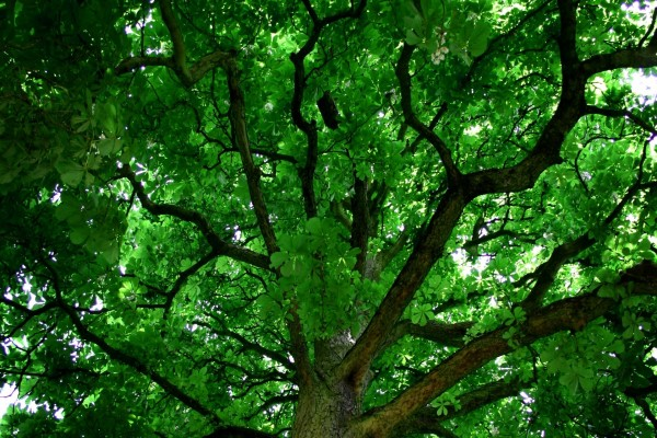A la sombra de un hermoso árbol