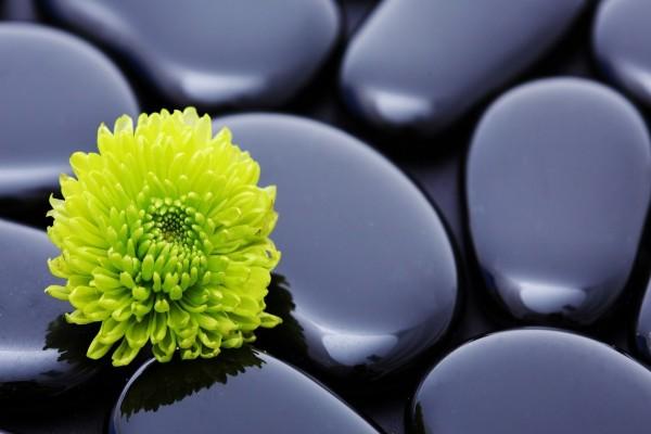 Flor verde sobre piedras negras