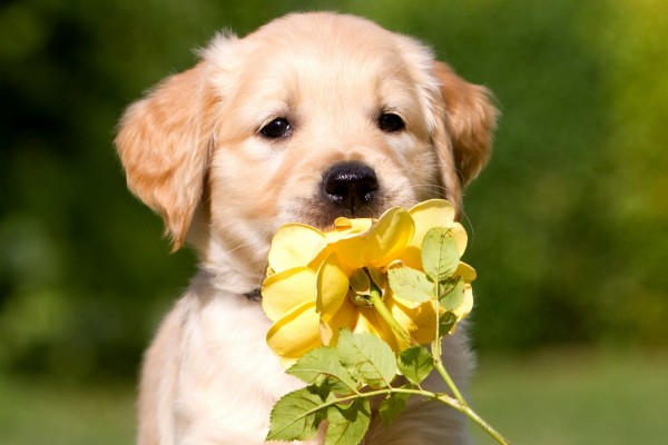 Perrito oliendo una flor