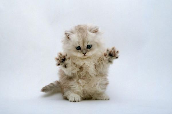 Gatito enseñando sus patas