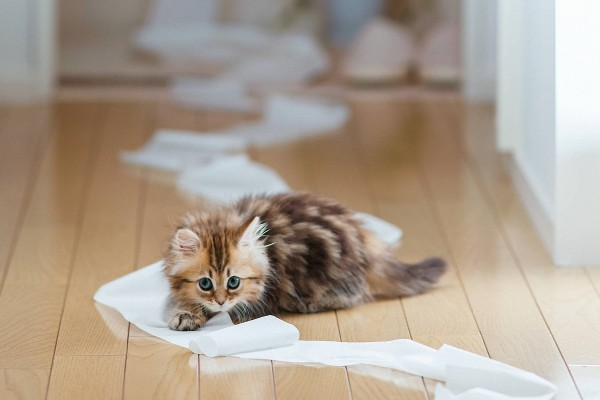 Gatito con papel higiénico