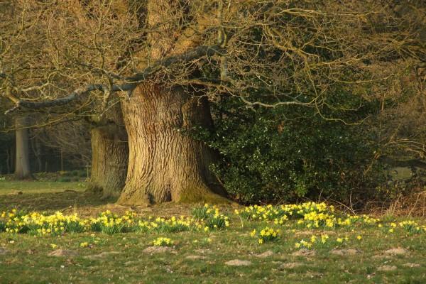 Flores amarillas junto a un árbol sin hojas