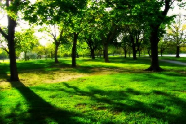 Sombras entre árboles