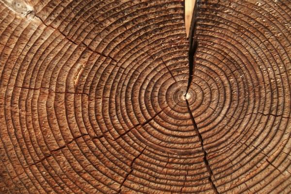 Anillos de un tronco de árbol